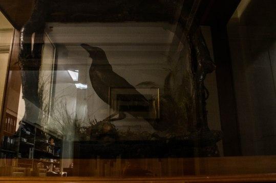 edgar-allan-poe-raven